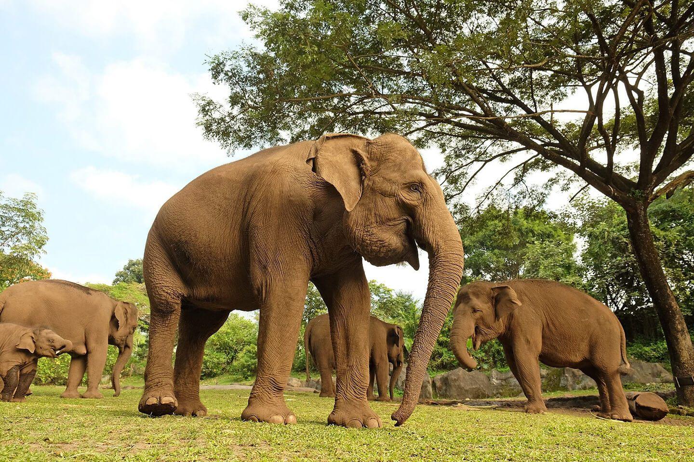 Bali Safari Kampung Gajah