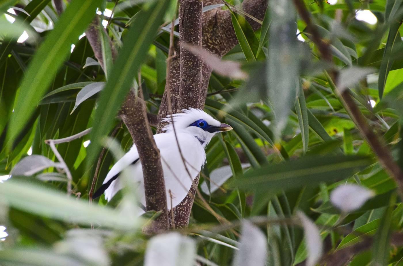 Curig Bali conservation