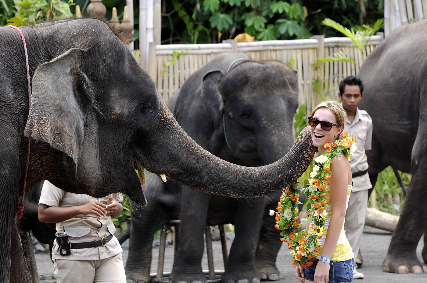 Mara River Safari Lodge Elephant Show at Bali Safari