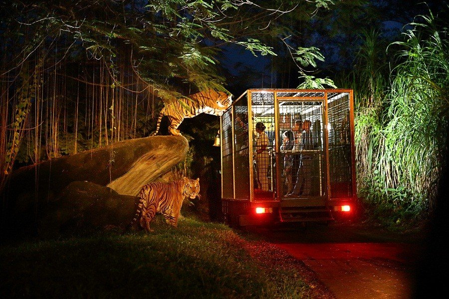 Night Safari at Bali Safari Mara River Safari Lodge