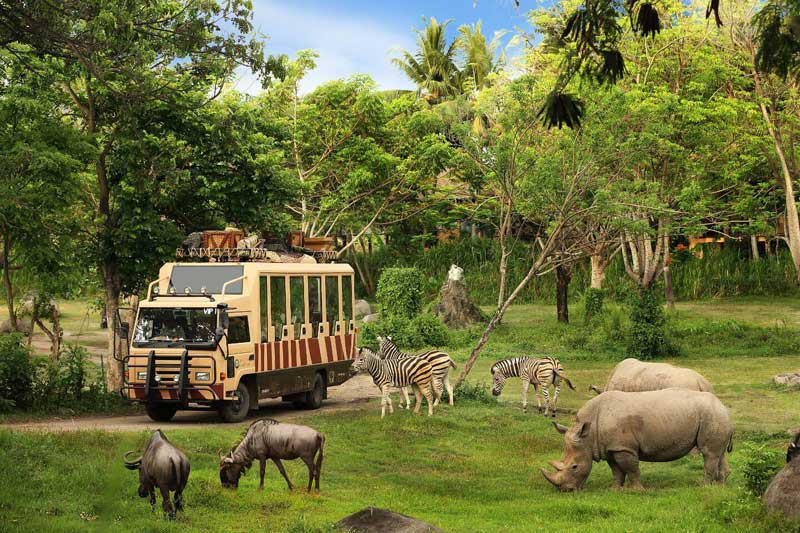 bali safari park - family activities bali - things to do in gianyar