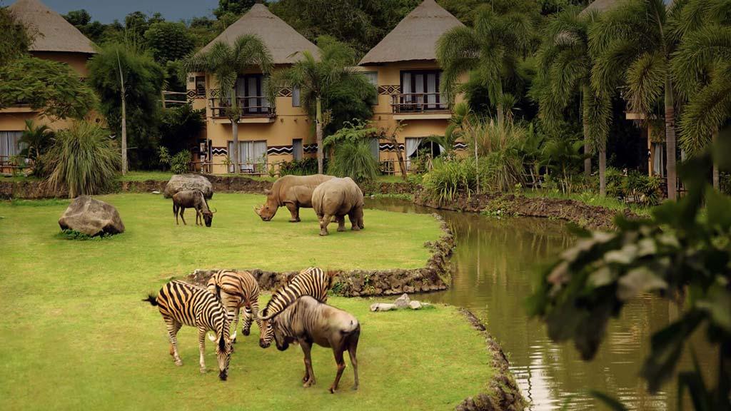 The Animal Show at Bali Safari Park - Mara River Safari Lodge