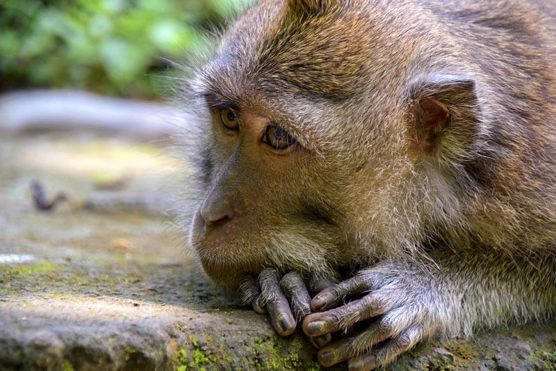 monkey forest ubud - instagram worthy spots gianyar