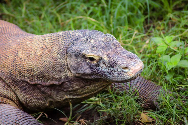 Wild-animals-seen-from-Mara-River-Safari-Lodge-2
