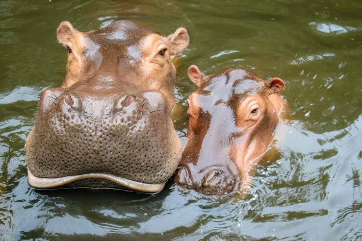 Wild-animals-seen-from-Mara-River-Safari-Lodge-5