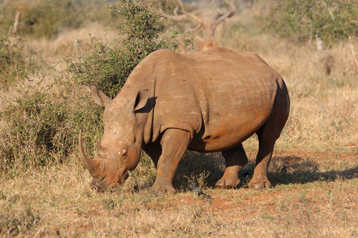 Conservation – Help Save the Rhinos