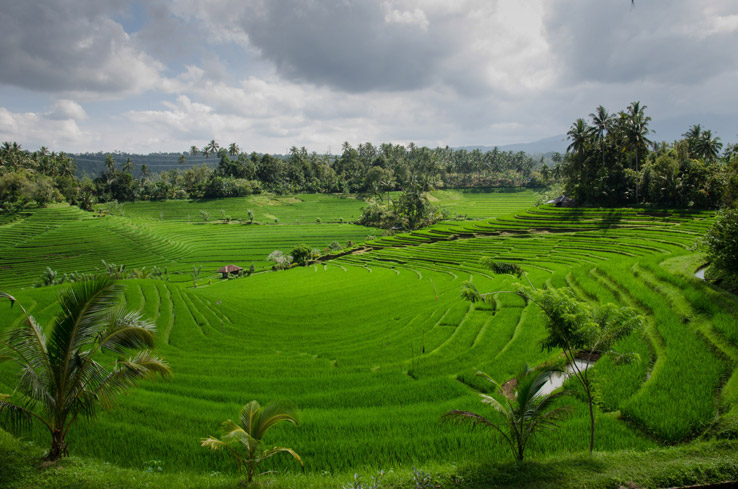 Traveling to Ubud with a Baby