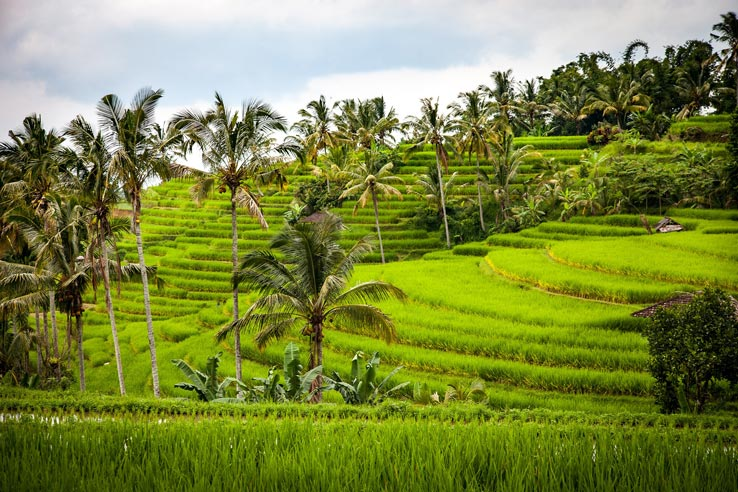 What to do in Bali during the Rainy Season