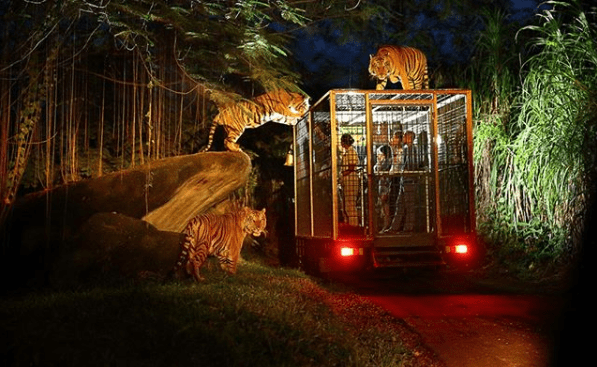 Night Safari Bali