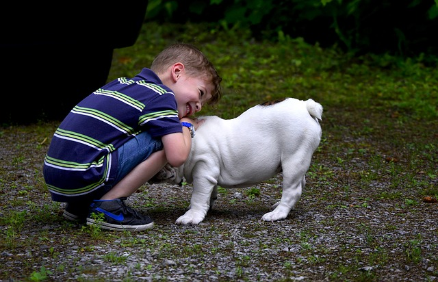 animals for children
