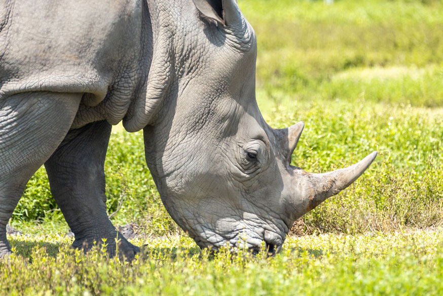 Facts You Might Not Know About Rhinos