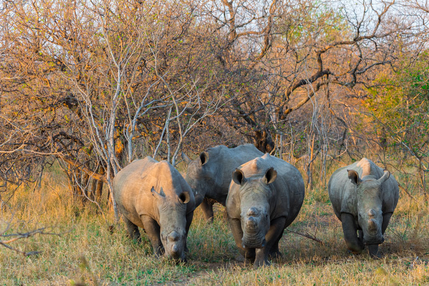 Fact You Might Not Know About Rhinos