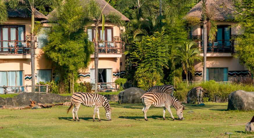 Zebra From balcony Mara River Safari Lodge