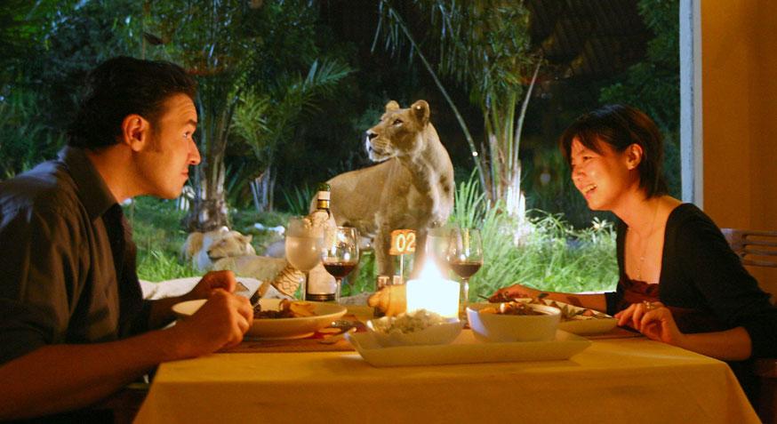 Dinner with Lion in restaurant