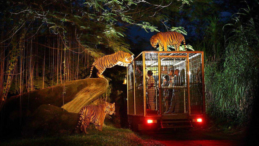 Night Safari at Bali Safari Park