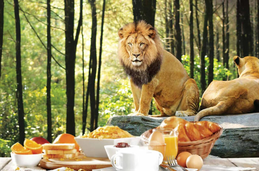 Breakfast with Lion at Bali Safari Park