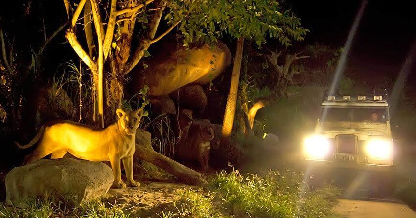 Walking Safari at Bali Safari Park
