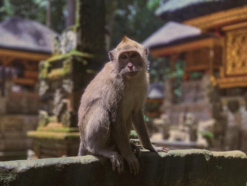 Monkey Forest in Gianyar