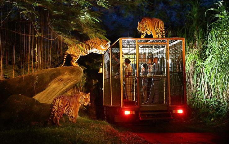 NIght Safari Bali Safari Park