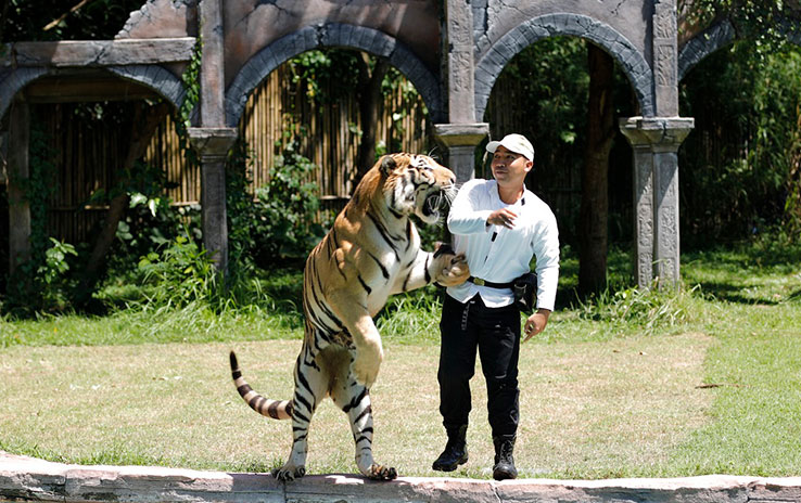 tiger_show